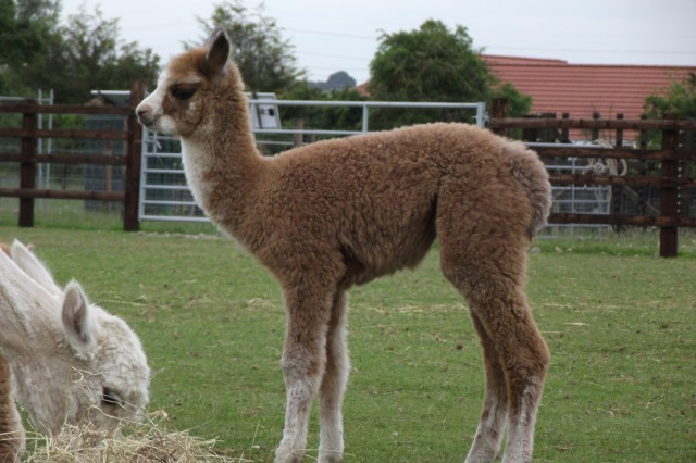 Cria Update: June 2016